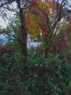 Herbstliche Impulse_03