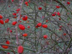 Herbstliche Impulse_04