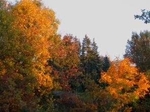Herbstliche Impulse_05