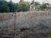 Herbstliche Impulse_06
