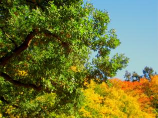 Herbstliche Impulse_09